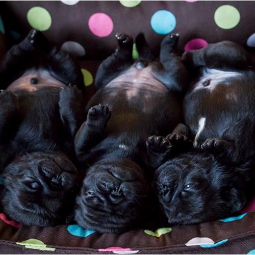 Cuteness overload in het Suzie mandje.