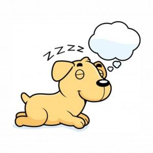 Kunnen honden en katten dromen?