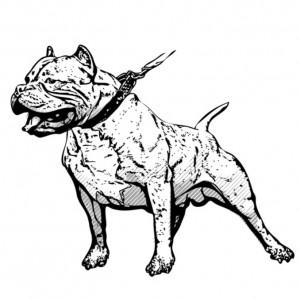 Hoog-risico honden