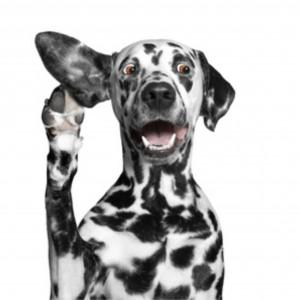 Kunnen honden snurken en is er iets tegen te doen?
